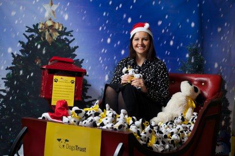 Dogs Trust sleigh