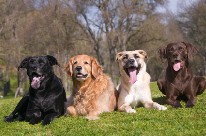 159groupofdogs.jpg