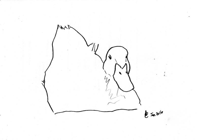 DuckSketch_160126_0001.jpg