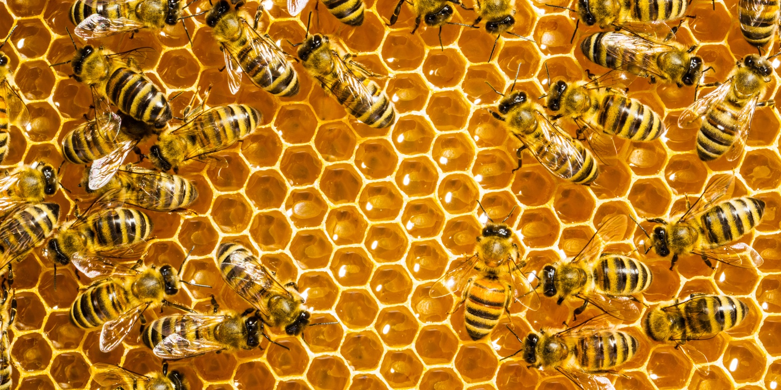 lots-of-bees-for-website.jpg