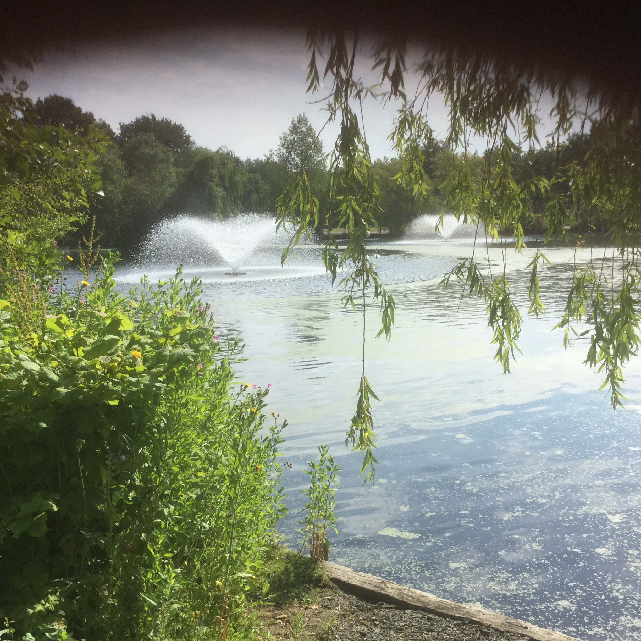 Chelmsford Central Park July 2015