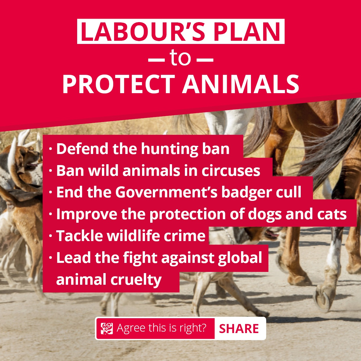 animal_protection_plan_-_facebook_image.jpg