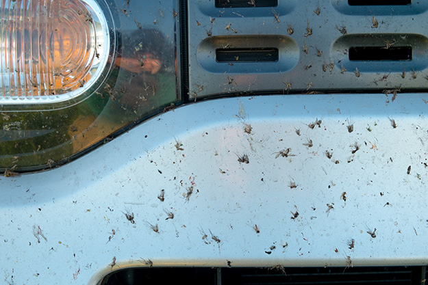 insects smashed on car bumper