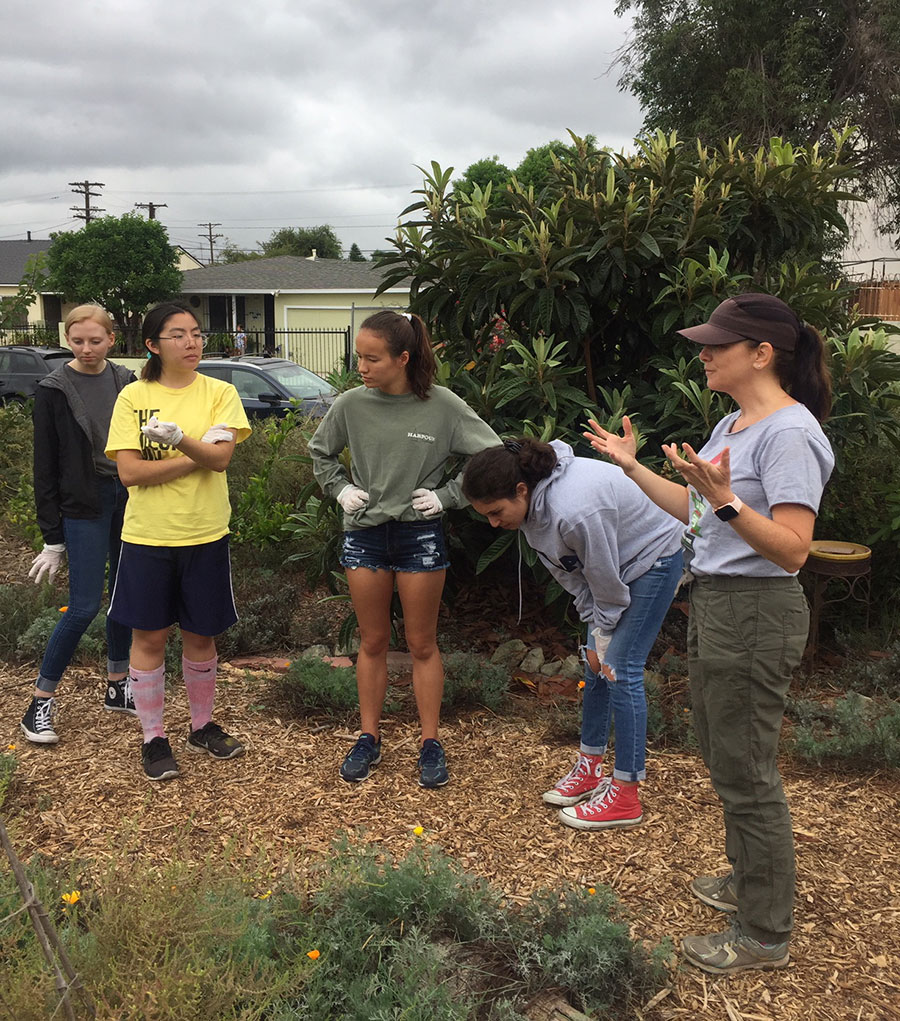 UCLA volunteer day at LAGG Teaching Gardena