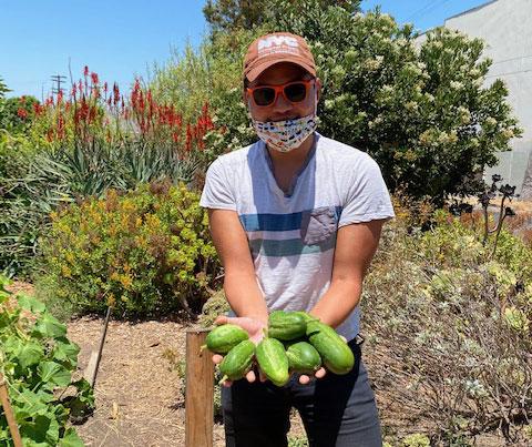 cucumbers grown in LA Green Grounds garden