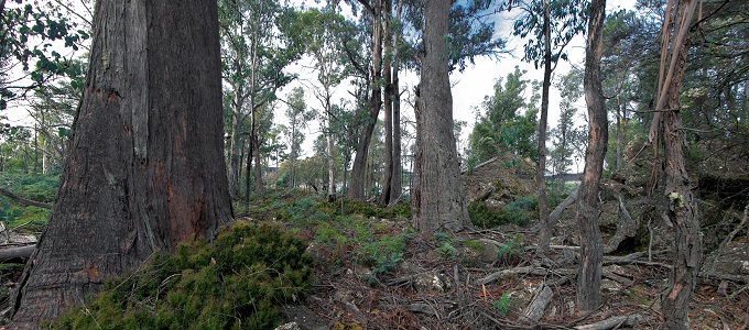 LoI_forest_panorama-1_small_©Phil_Milner.jpg