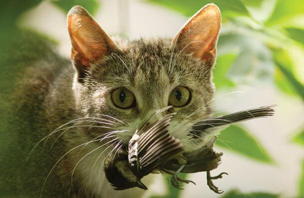 cat_kills.jpg