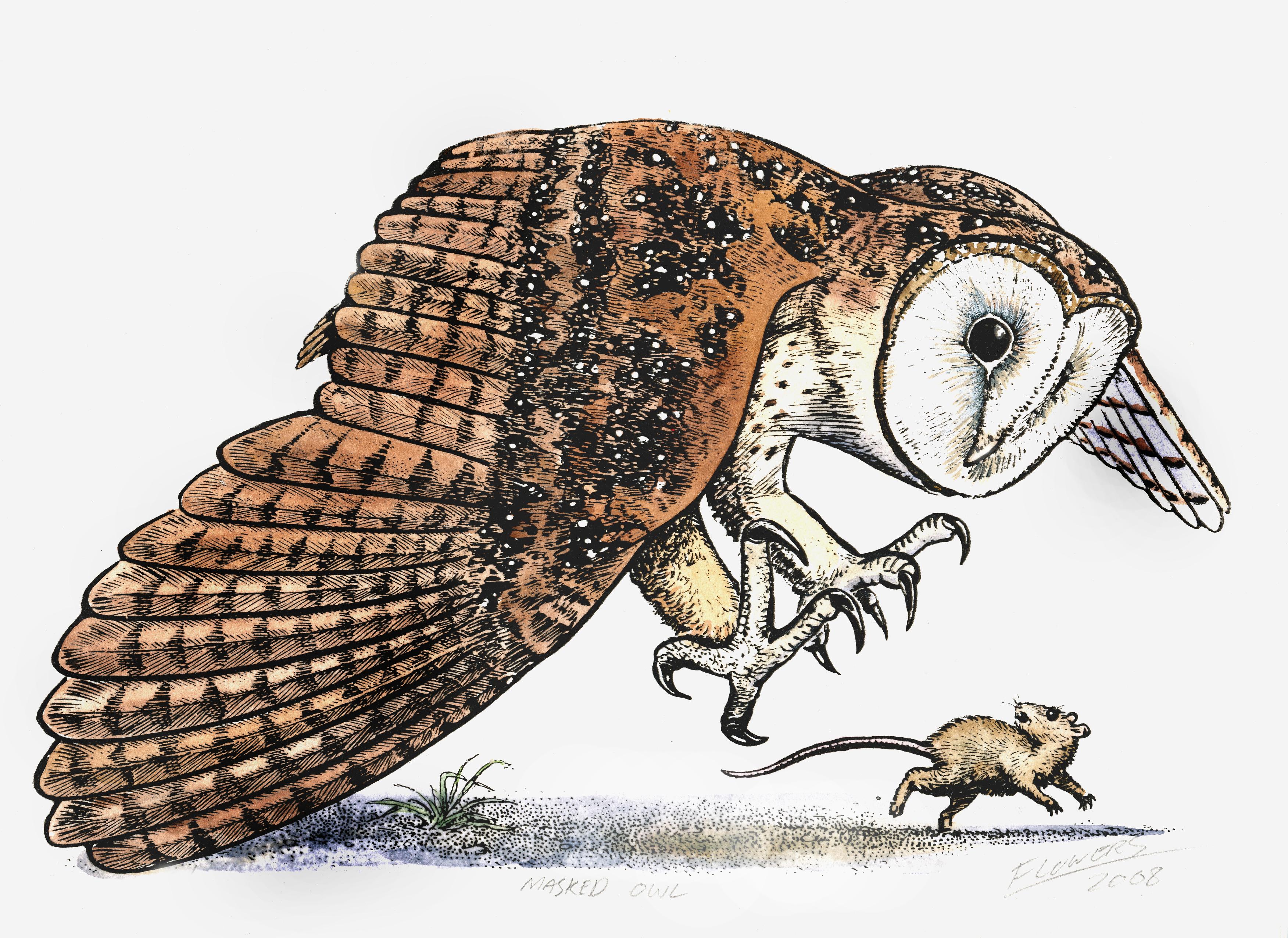 Artwork credit Bill Flowers, masked owl
