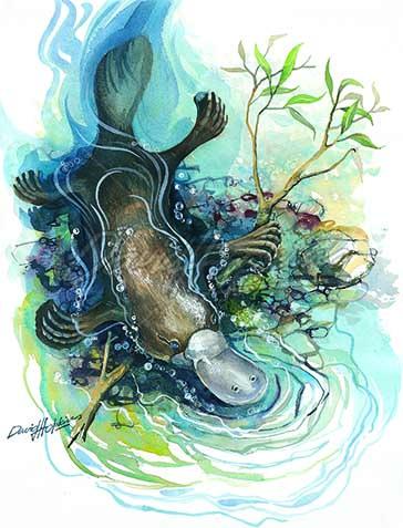 Platypus_swimming.jpg