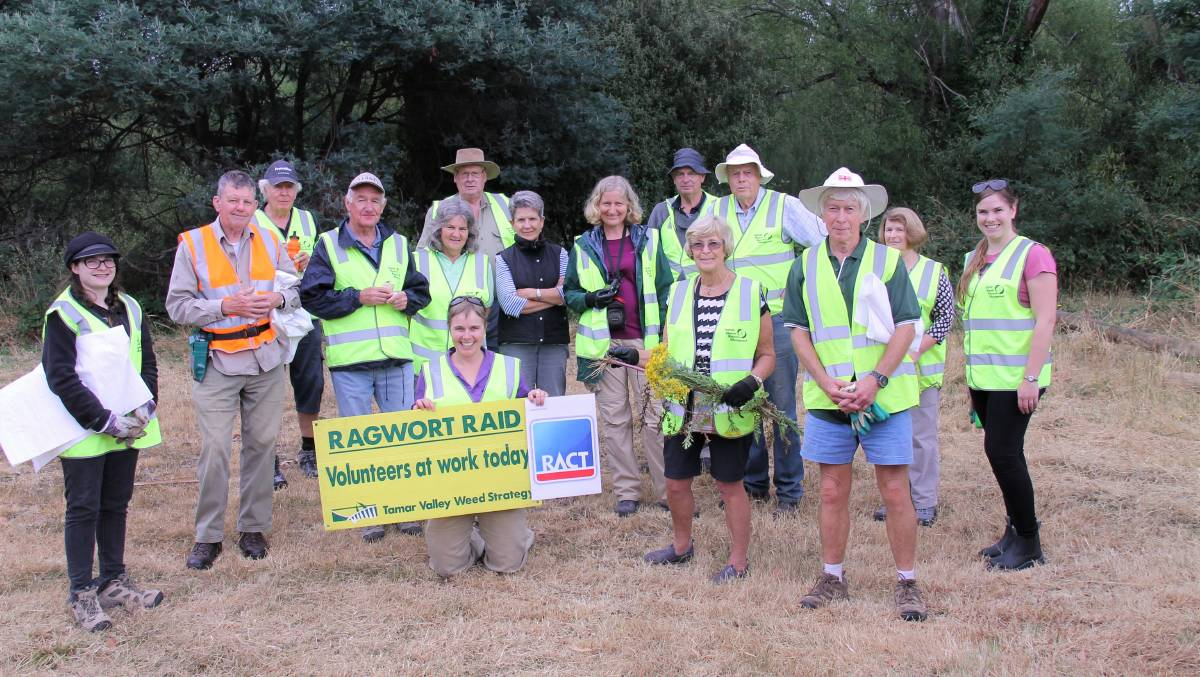The removal of ragwort has become another focus for Tamar NRM and its partners. Picture: supplied