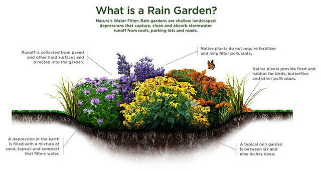 nj-rain-garden-graphic.jpg