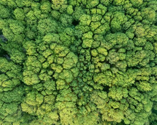 Explor'IA x Environnement