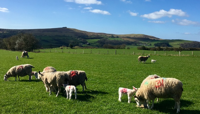 New consultation on tenant farming launched