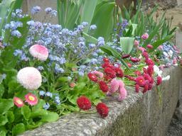 Spring flowers in a granite trough