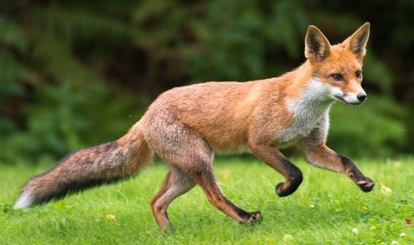 Martin pledges to keep hunting ban