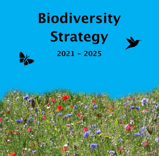 Borough Lib Dems Take Action on Biodiversity