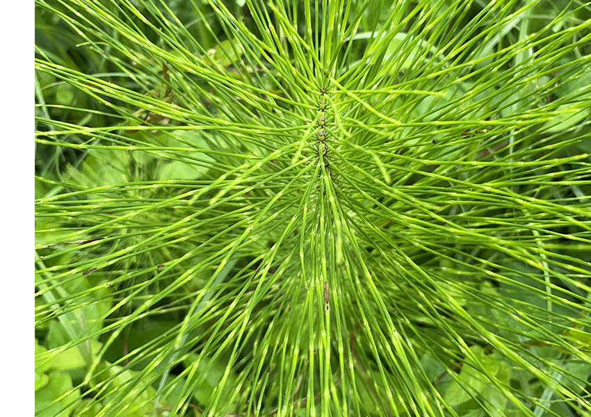 website_green_plant_850x600.jpg