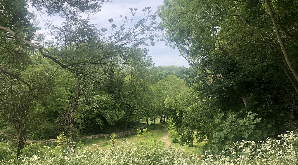 Six new official nature reserves for Maidstone