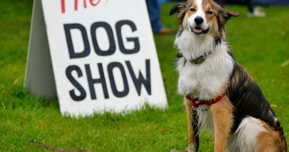 Didsbury Dog Show at Didsbury Festival