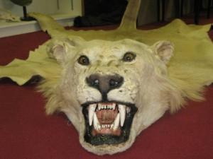 key_lions.png