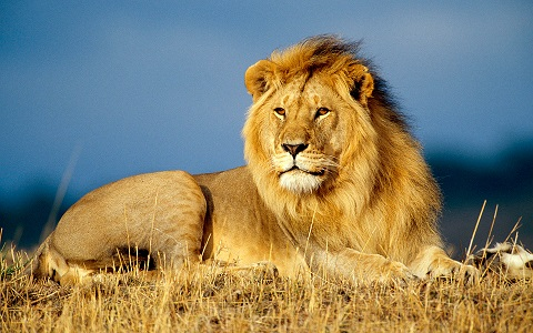 Dutch ban lion trophy imports - time for UK to follow suit