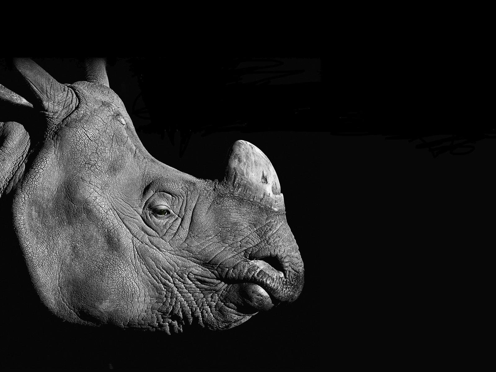 key_rhino.jpg