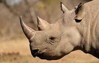 key_rhino.png