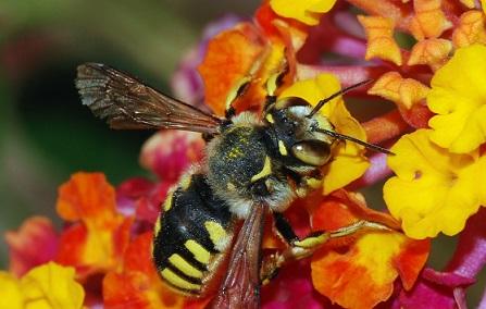key_bees.jpg