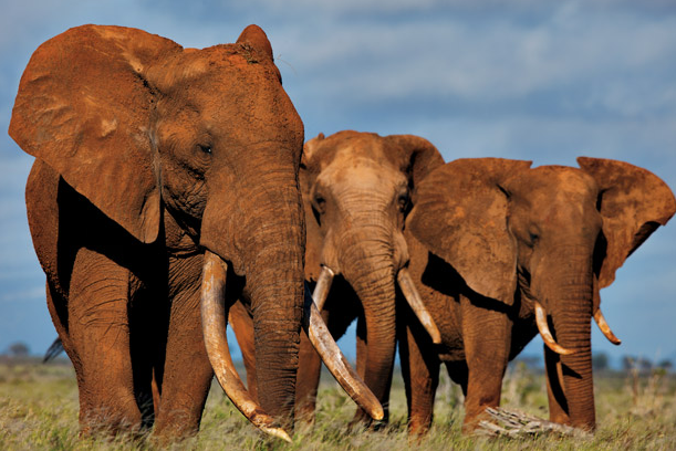 MEPs call for an end to the ivory trade in historic vote