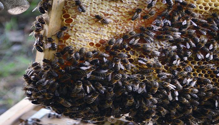 key_beehive.png