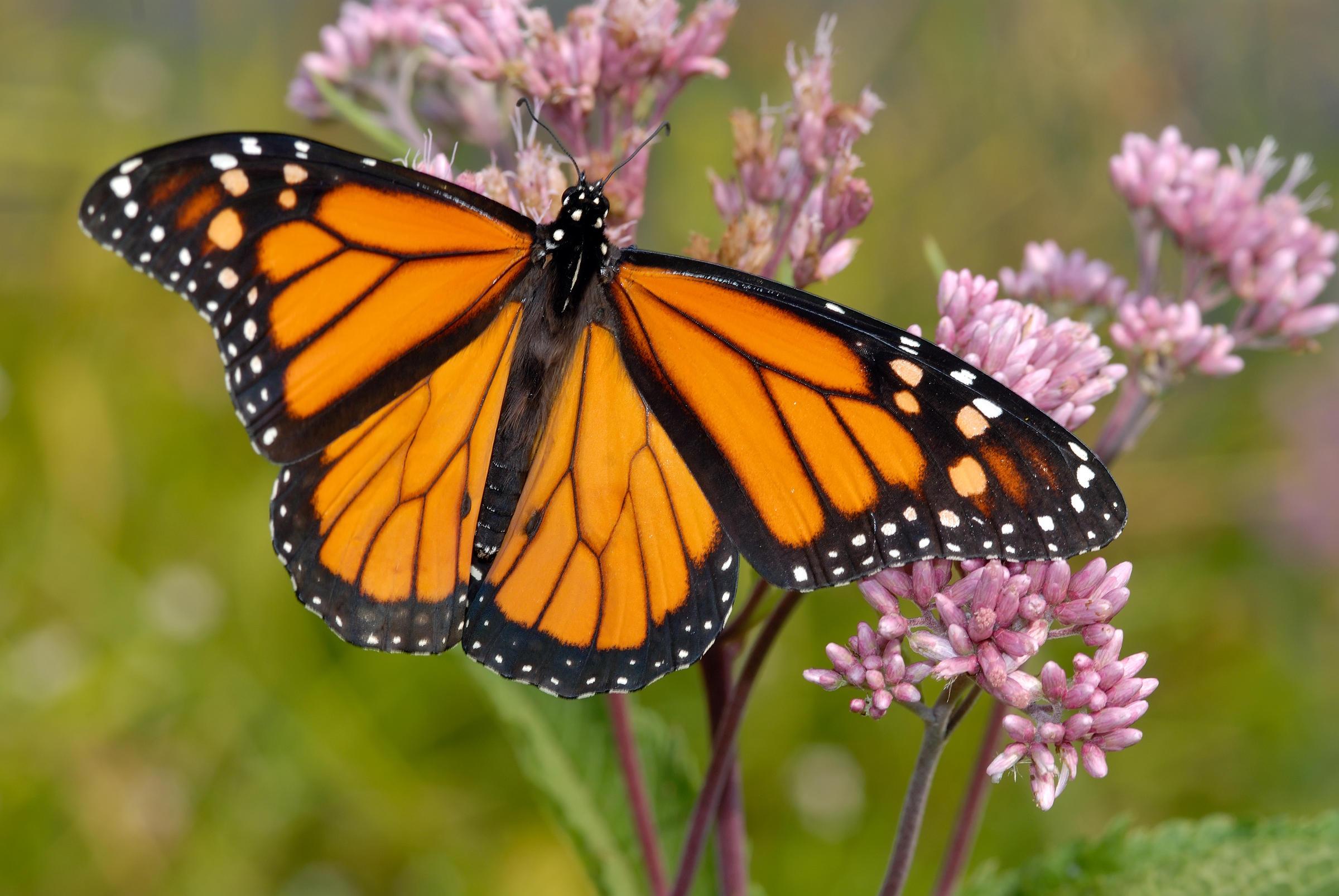 key_butterfly.jpg