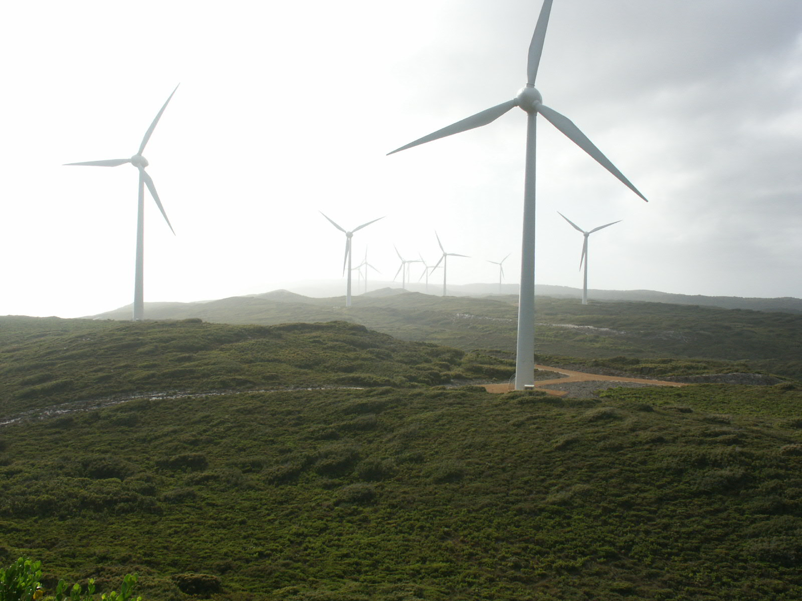 key_albany_windfarm.jpg