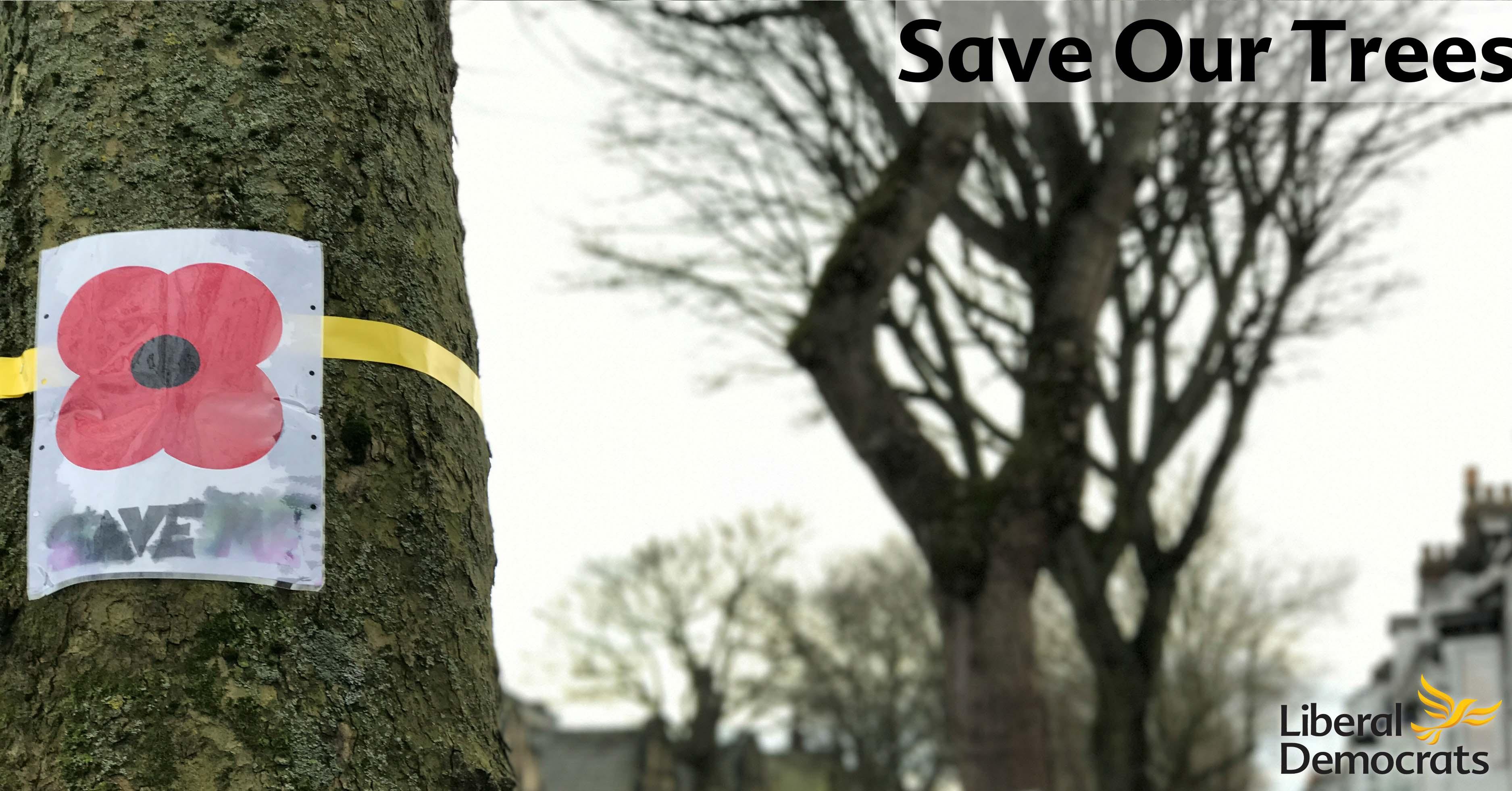 UPDATE: Sheffield's Trees