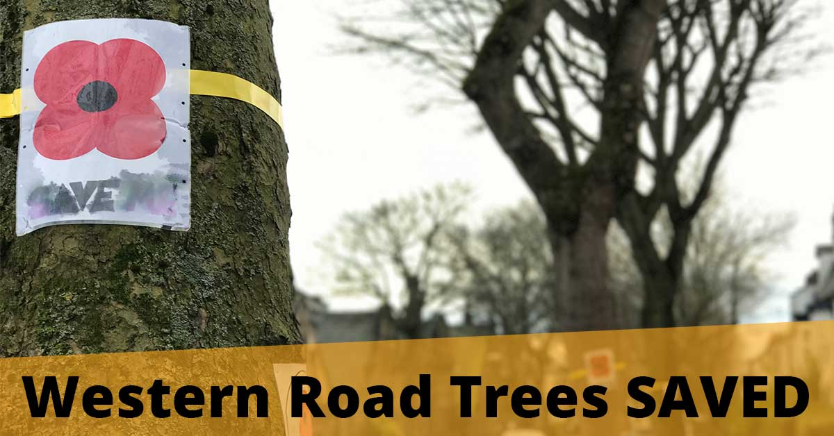Western Road Trees SAVED