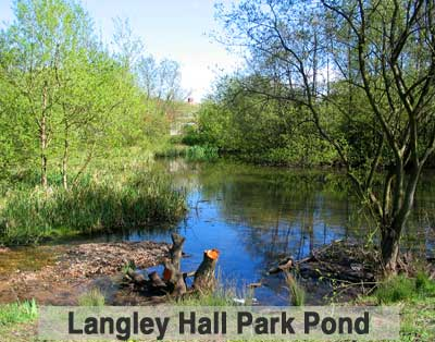 Langley Hall Park Pond