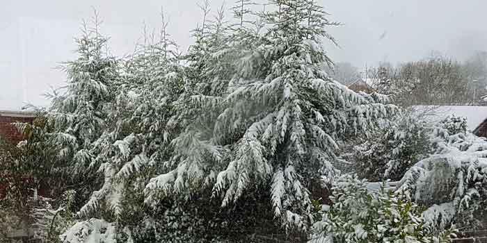 snow-700x350.jpg