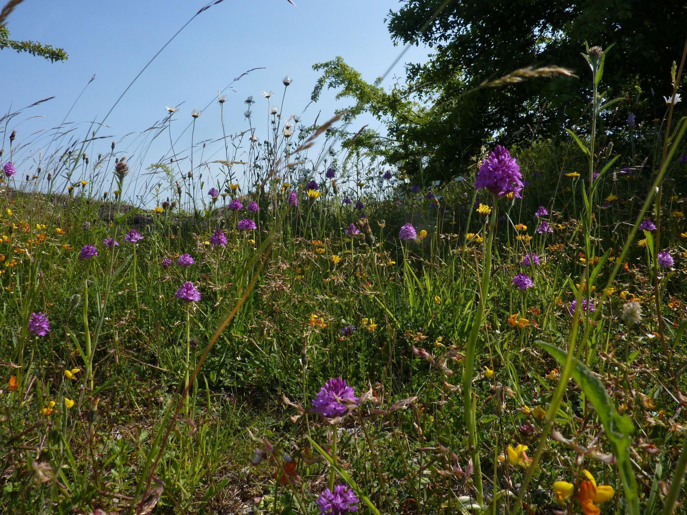 Help us to grow wildflower verges!