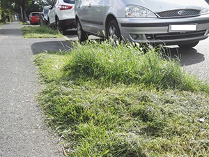 Uncut grass
