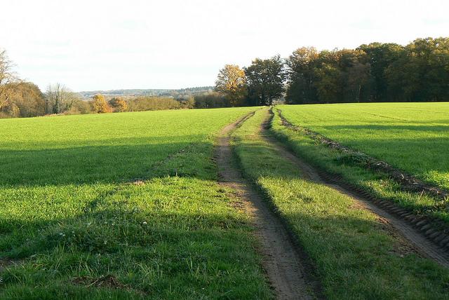 Sandleford fields
