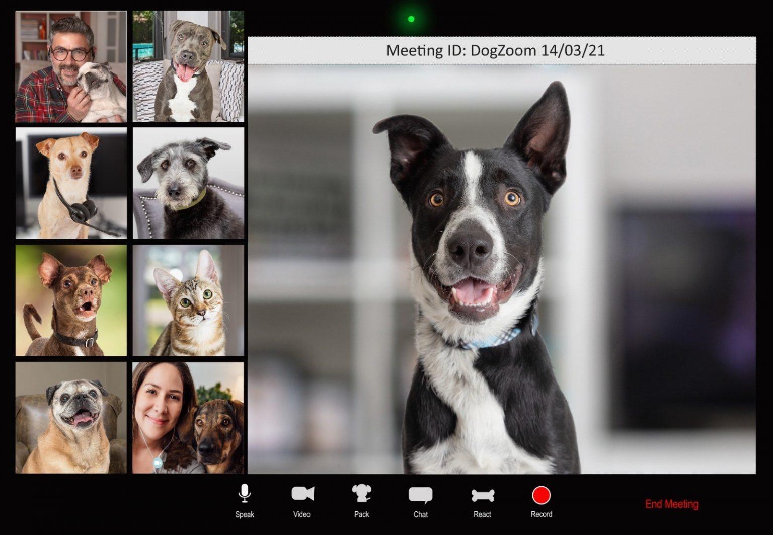 Dog-Zoom-1536x1063.jpg