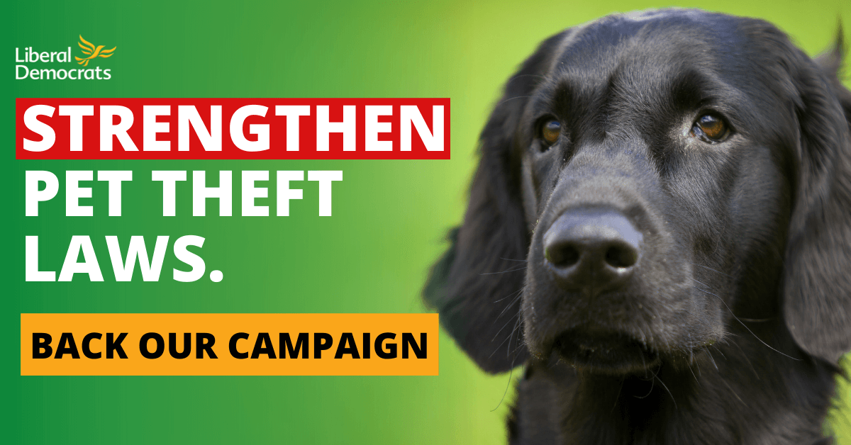 MPs under fire for failing to back pet theft law