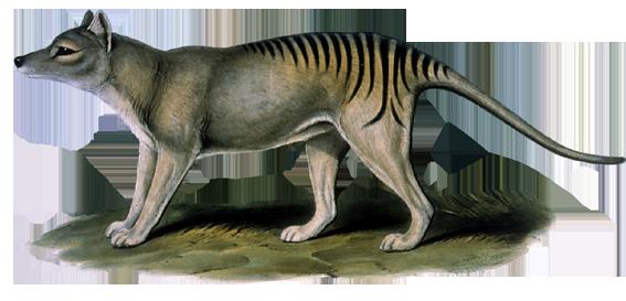 thylacine_deep.png