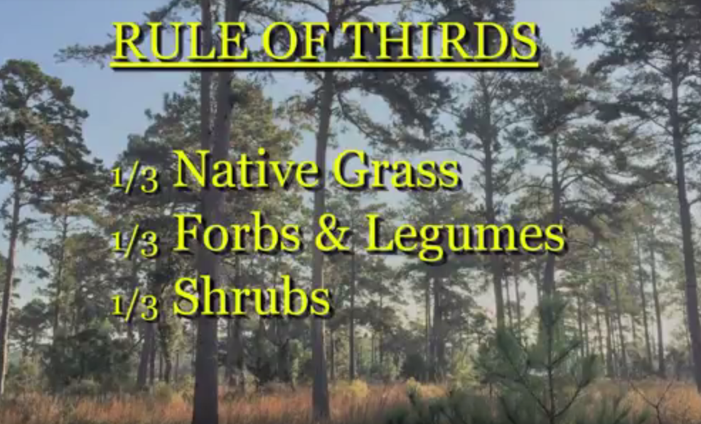 Quail_rule_of_thirds.png