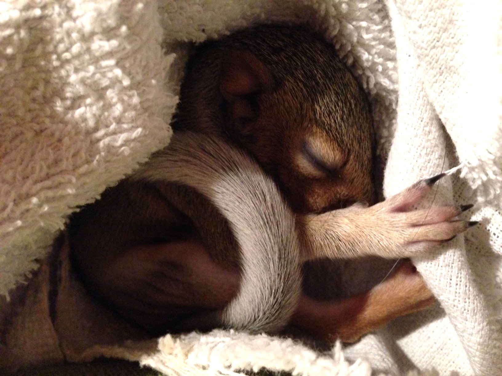 Baby_Squirrel.jpg
