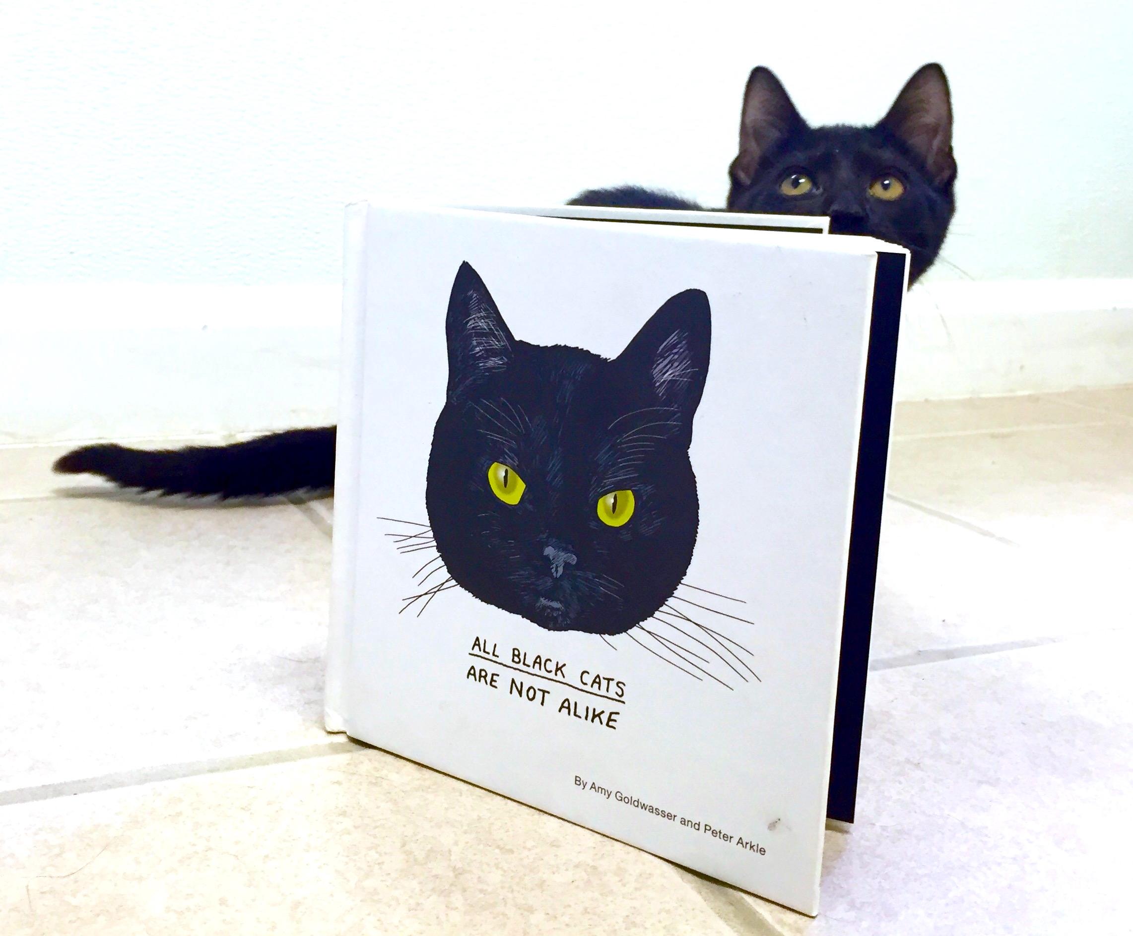 blackcat.jpeg