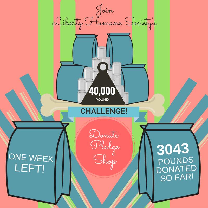 40K_Challenge_Week_1.png