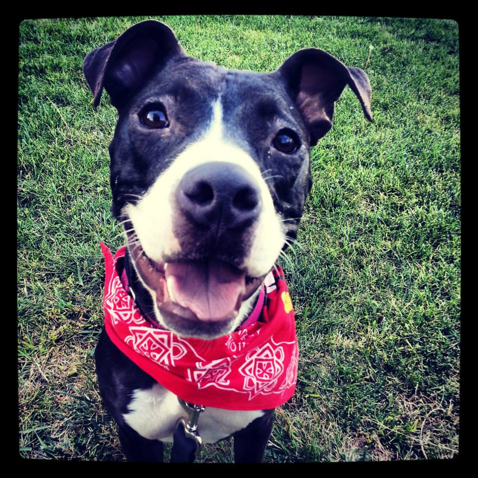 Black_happy_dog_bandana.jpg