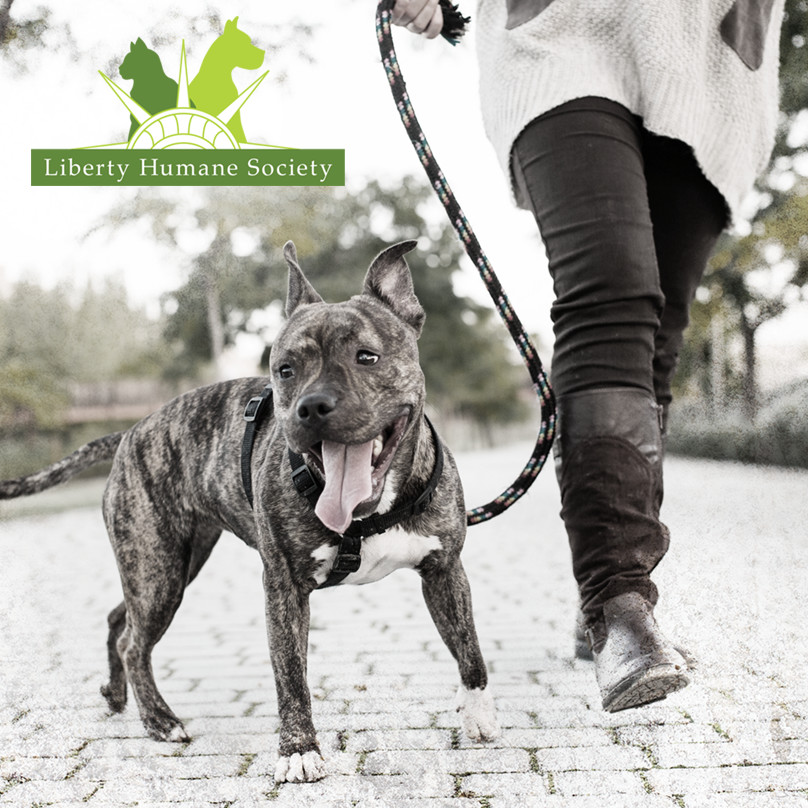 dog-logo.jpg