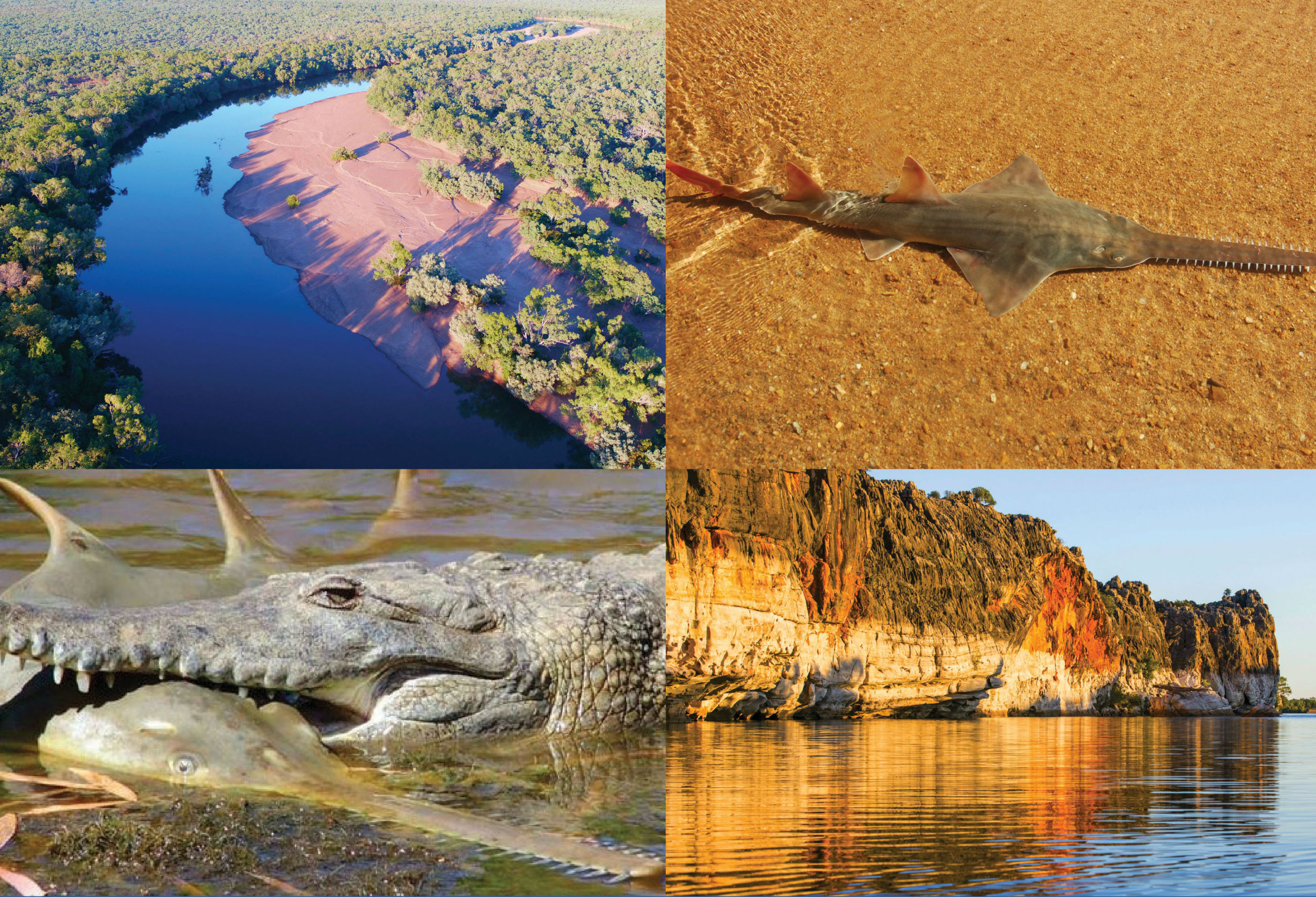 The Fitzroy is the lifeblood of the Kimberley and is a globally important nursery and breeding ground for the critically endangered Freshwater Sawfish.