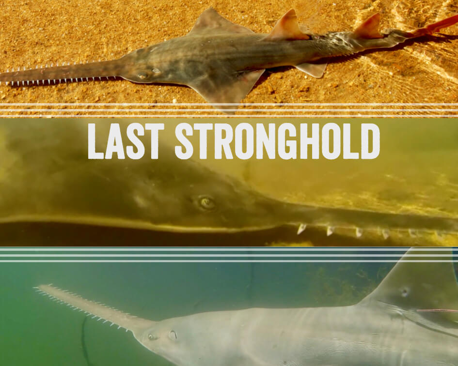Last Stronghold